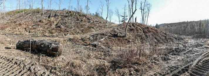 clear cut forest in Massachusetts